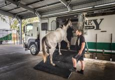 Allison transmissions help Sydney Horse Transport move some of the best and most valuable racehorses around Australia and is tasked with ensuring they arrive at their destinations in good condition and in an unstressed state.